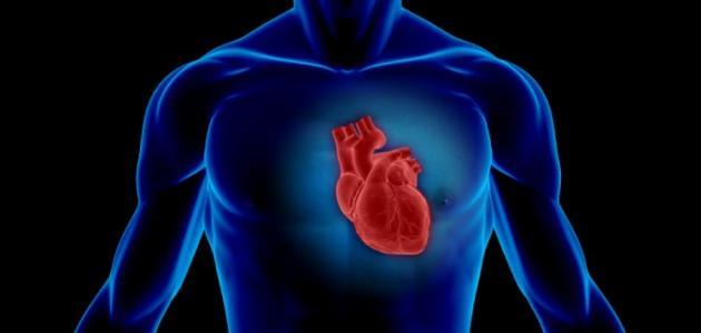 أين يقع قلب الإنسان