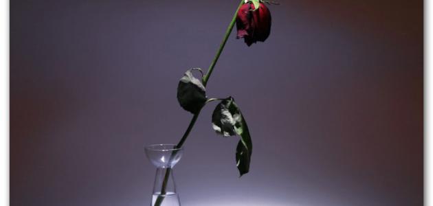 كلام الحب الحزين