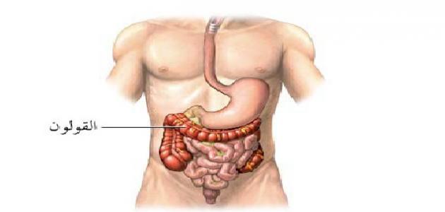 أين يقع القولون في جسم الإنسان