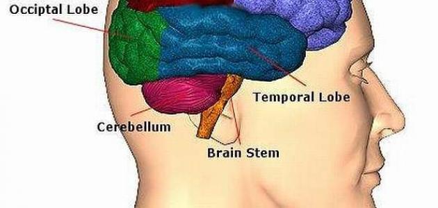 ما هي أعراض سرطان الدماغ