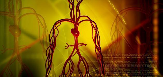 ما هي أسباب هبوط الدورة الدموية