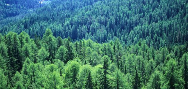 أين توجد أكبر غابة في العالم