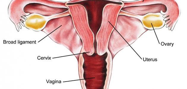 ما هي أسباب تضخم الرحم