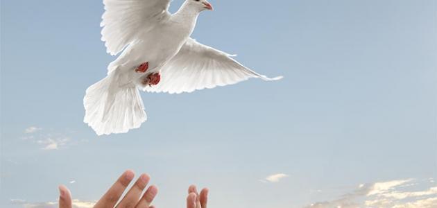 تعريف السلام