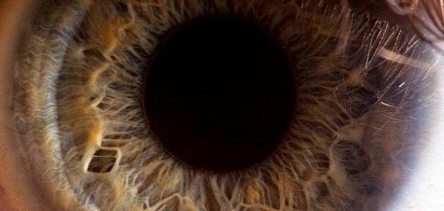 ما هي حدقة العين