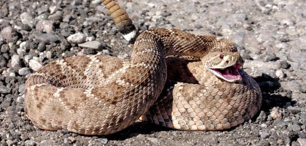 الثعابين ط£ظٹظ†_%