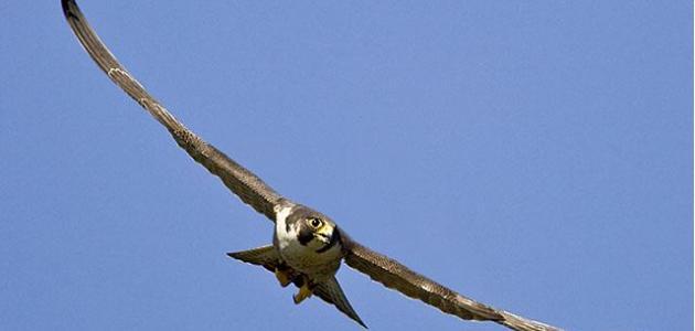 أكبر طائر في العالم