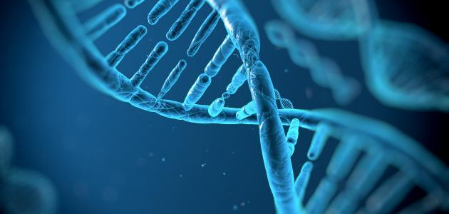 ما وظيفة الحمض النووي DNA