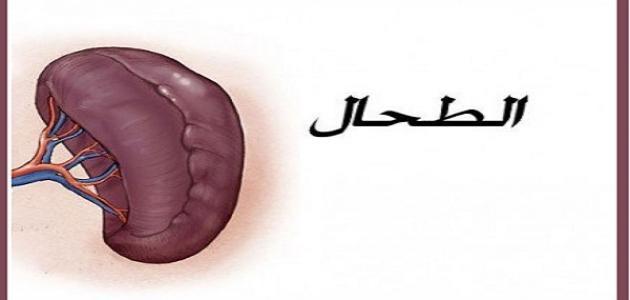 ما هي أعراض أمراض الطحال