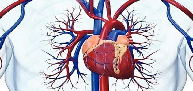 أين موقع القلب في جسم الإنسان