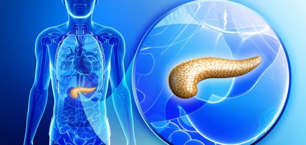 1382d7194 أين يقع البنكرياس في جسم الإنسان - موضوع