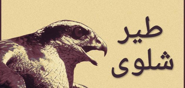 ما هو طير الشلوى