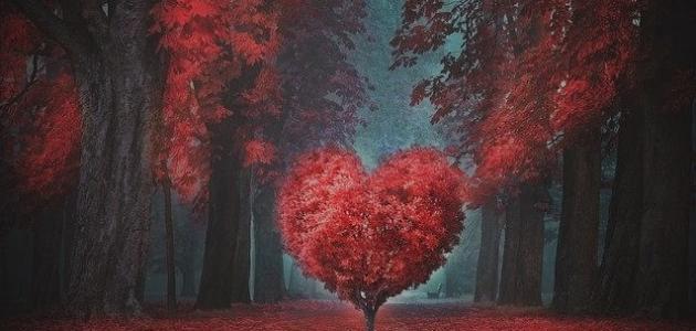 تعريف الحب : ما هو الحب