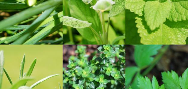 فوائد الأعشاب الطبيعية