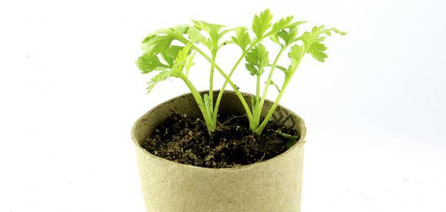 فوائد النباتات