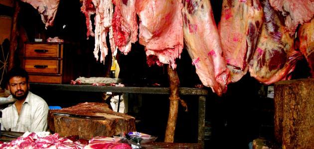 فوائد لحم الجمل