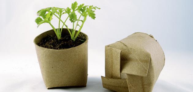 فوائد النبات