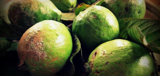 فوائد الجوافة للرجيم