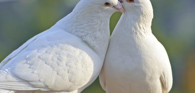 أهمية السلام فى حياتنا
