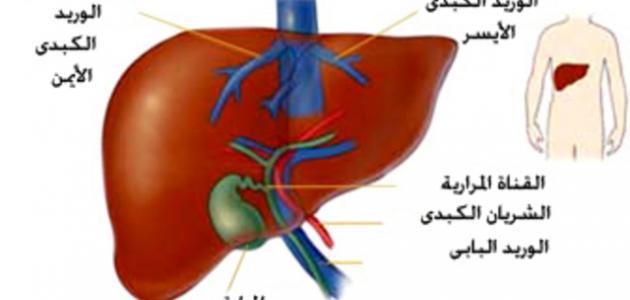 طرق انتقال التهاب الكبد الوبائي