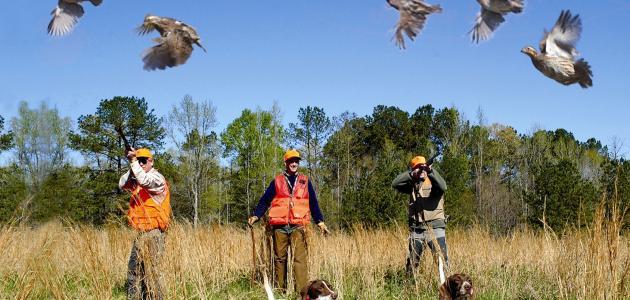 كيفية صيد العصافير