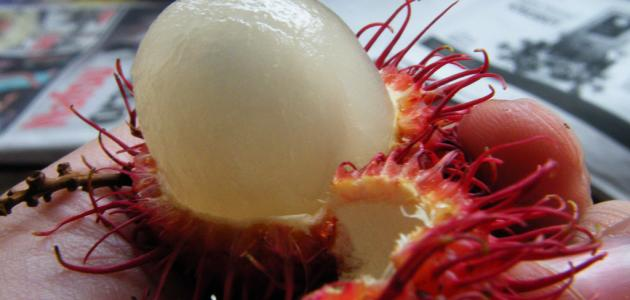 فوائد فاكهة الرامبوتان