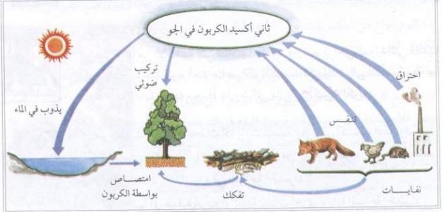 أهمية الهواء للكائنات الحية