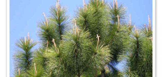 أهمية النباتات مغطاة البذور