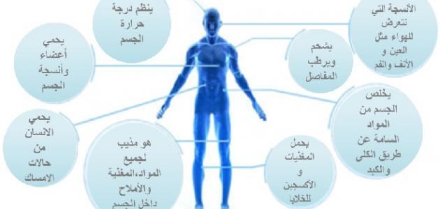 أهمية الماء في جسم الإنسان موضوع