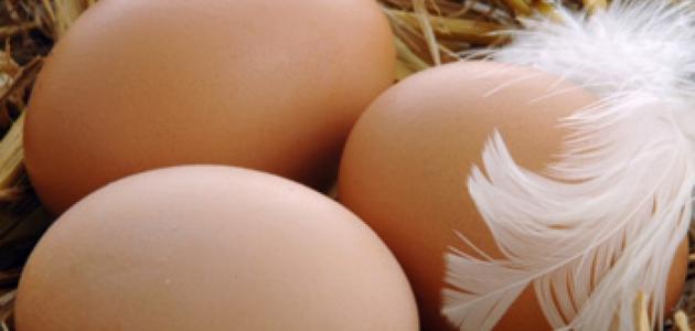 فوائد بيض الدجاج