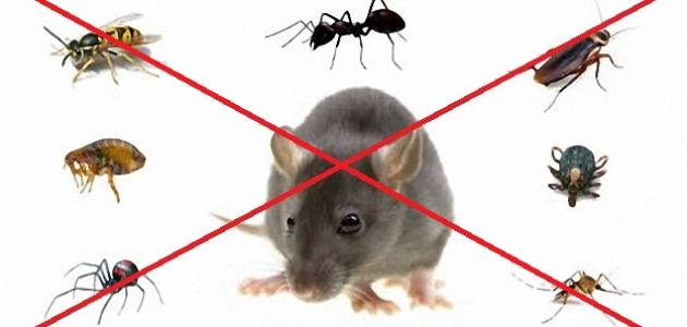 خدمات مكافحة الحشرات