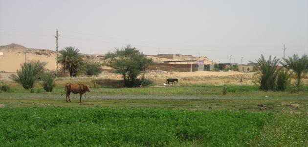 أهمية الزراعة فى مصر
