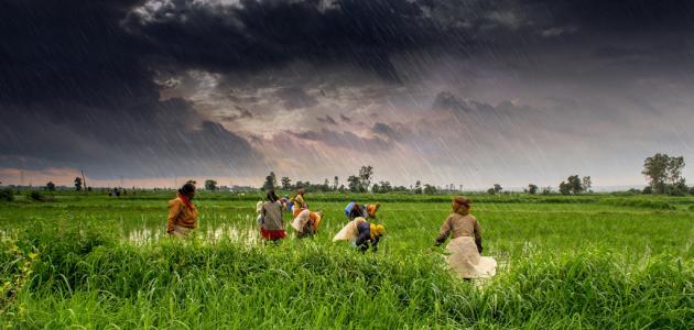 أهم المحاصيل الزراعية في مصر