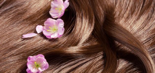 وصفات طبيعية لتكثيف الشعر