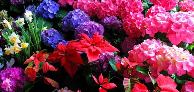 ما هي أجمل الزهور في العالم