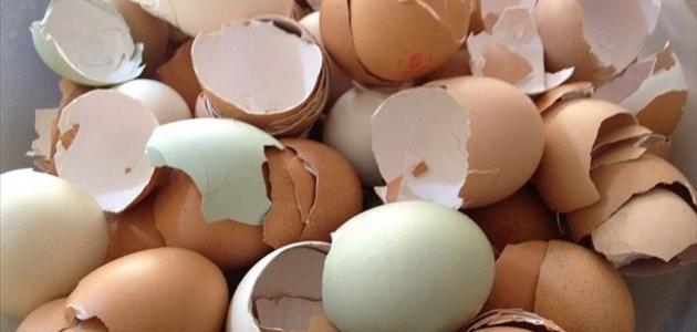 فوائد قشرة البيض