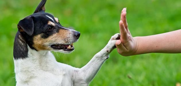 طرق تربية الكلاب