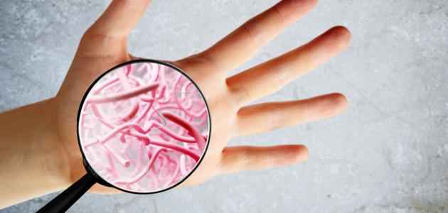 طرق تكاثر البكتيريا