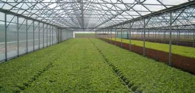 ����� ������� ������ ����������� أهمية_الزراعة_داخل_البيوت_البلاستيكية.jpg
