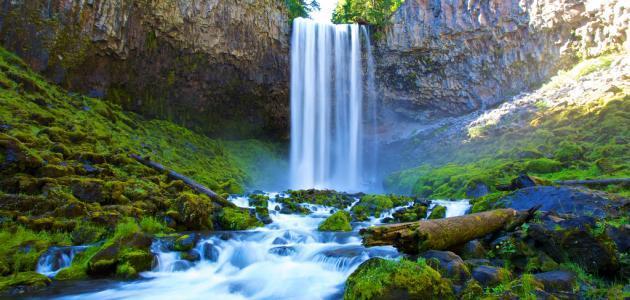 أهمية المطر للكائنات الحية
