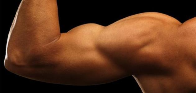 طريقة تقوية الجسم والعضلات