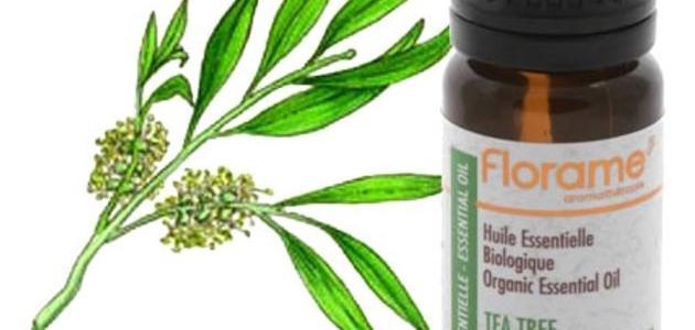 فوائد زيت شجرة الشاي للبشرة الدهنية