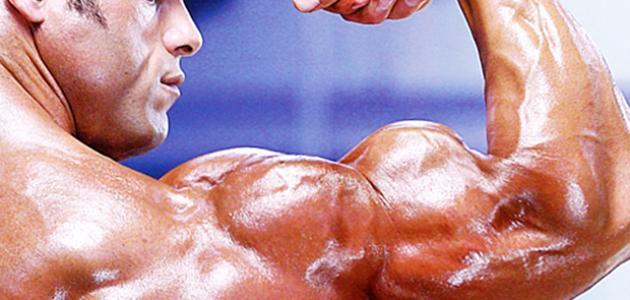 كيف تكبر العضلات