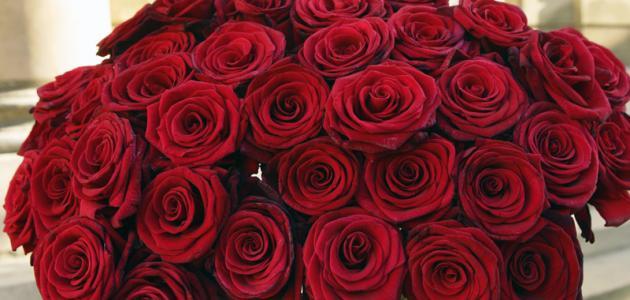 عبارات عن الورد