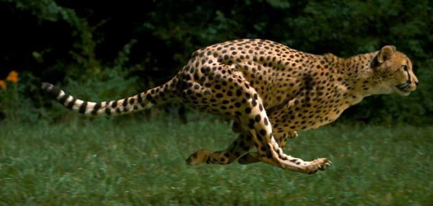 ما هو أسرع حيوان