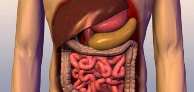 أين يحدث هضم الدهون