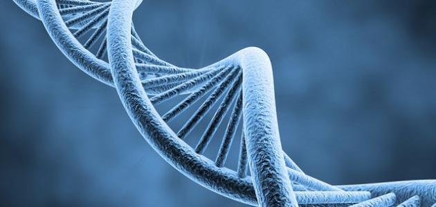 بحث عن علم الوراثة