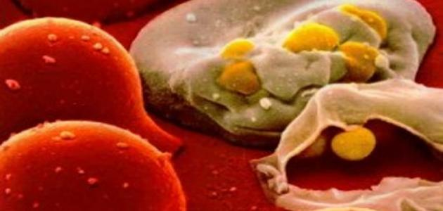 ما هي الأمراض التي تعالج بالخلايا الجذعية