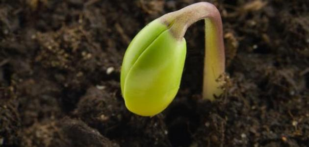 تعريف خصوبة التربة