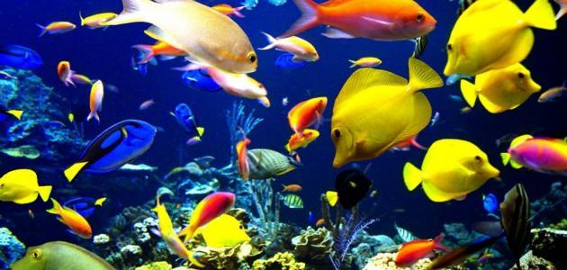 كيف تتنفس الأسماك